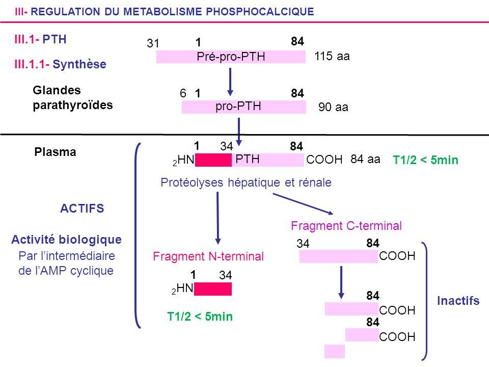 III- REGULATION DU METABOLISME PHOSPHOCALCIQUE III.1- PTH Glandes parathyroïdes Pré-pro-PTH 31 84 1 1 6 pro-PTH 115 aa 90 aa Plasma 1 84 PTH 84 aa 2 H