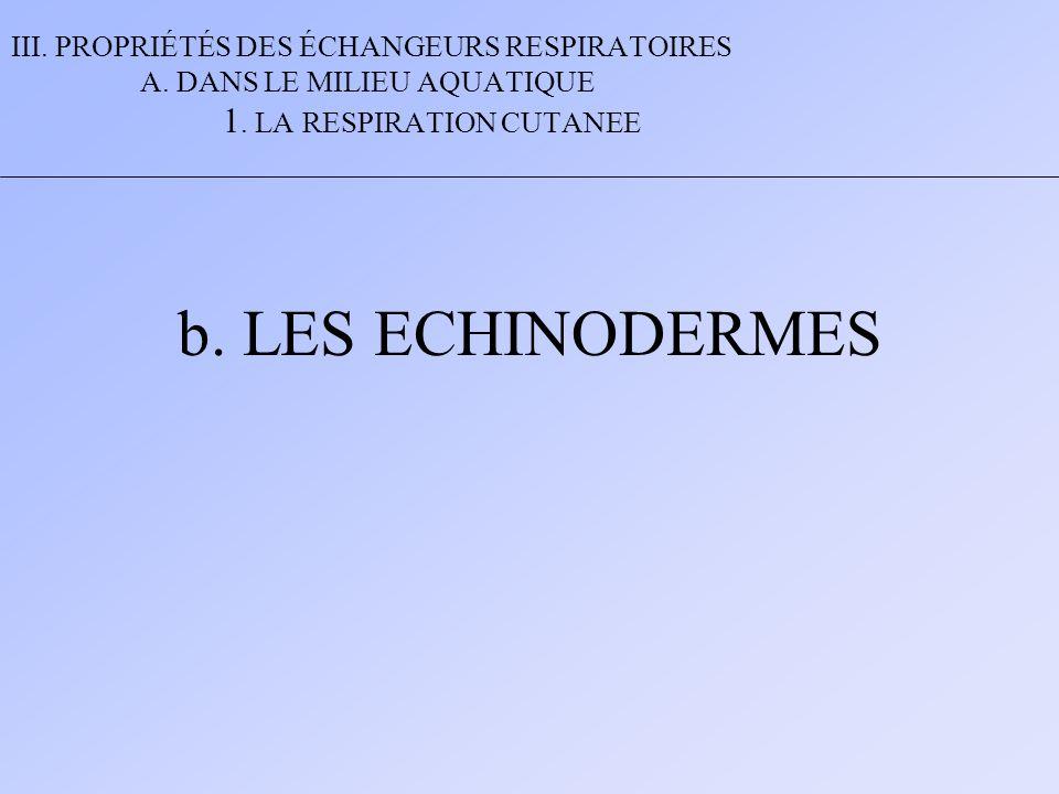 III. PROPRIÉTÉS DES ÉCHANGEURS RESPIRATOIRES A. DANS LE MILIEU AQUATIQUE 1. LA RESPIRATION CUTANEE b. LES ECHINODERMES