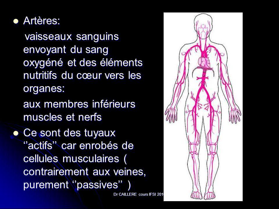 Dr CAILLERE cours IFSI 2010 Artères: Artères: vaisseaux sanguins envoyant du sang oxygéné et des éléments nutritifs du cœur vers les organes: vaisseaux sanguins envoyant du sang oxygéné et des éléments nutritifs du cœur vers les organes: aux membres inférieurs muscles et nerfs Ce sont des tuyaux actifs car enrobés de cellules musculaires ( contrairement aux veines, purement passives ) Ce sont des tuyaux actifs car enrobés de cellules musculaires ( contrairement aux veines, purement passives )