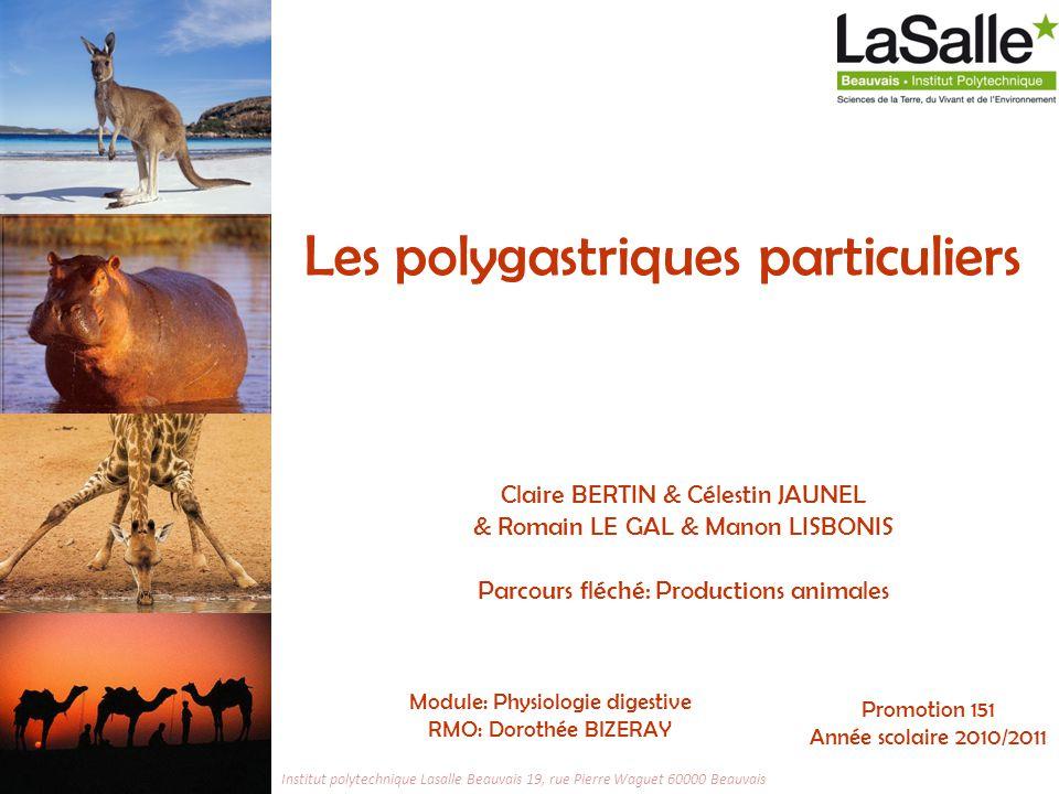 32 Physiologie digestive, les polygastriques particuliers 17 janvier 2011 Introduction I.