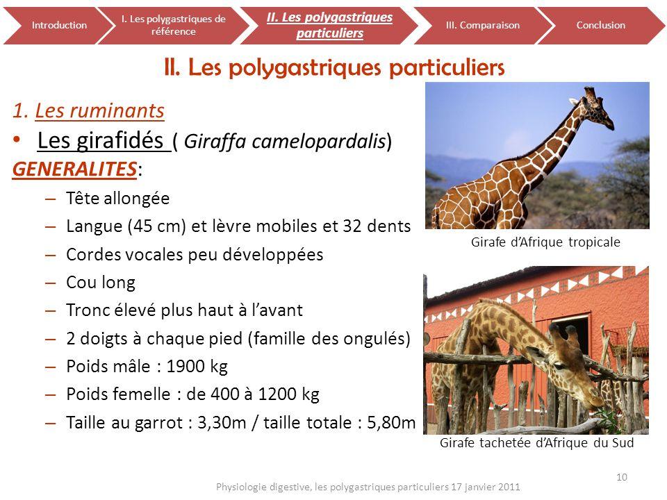 1. Les ruminants Les girafidés ( Giraffa camelopardalis) GENERALITES: – Tête allongée – Langue (45 cm) et lèvre mobiles et 32 dents – Cordes vocales p