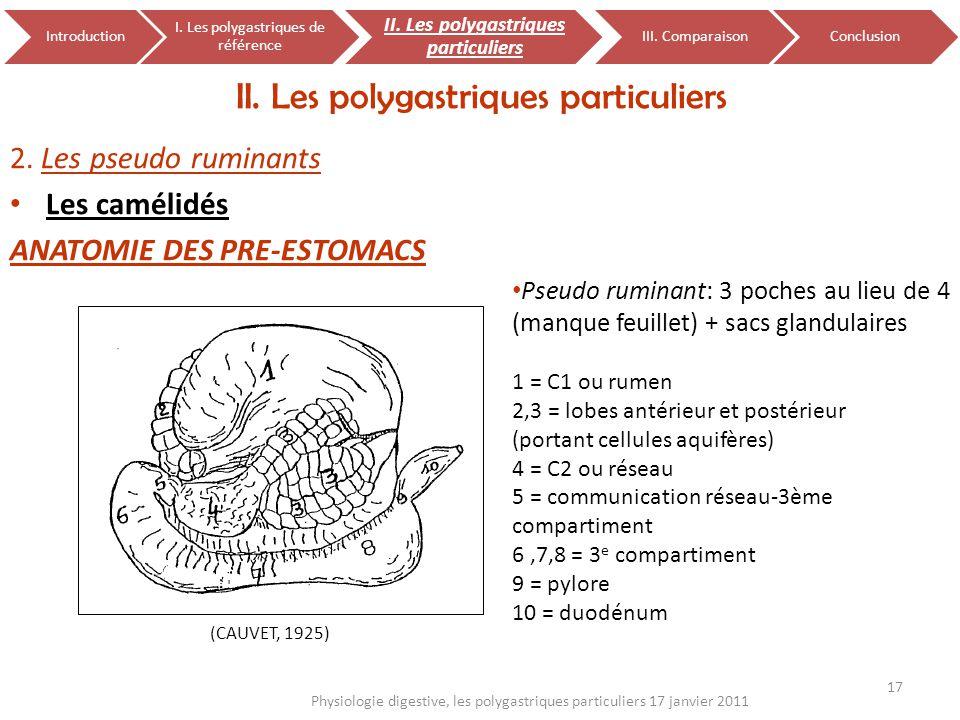 2. Les pseudo ruminants Les camélidés ANATOMIE DES PRE-ESTOMACS II. Les polygastriques particuliers 17 Physiologie digestive, les polygastriques parti