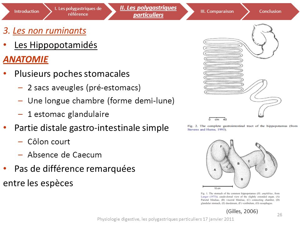 26 Physiologie digestive, les polygastriques particuliers 17 janvier 2011 Introduction I. Les polygastriques de référence II. Les polygastriques parti