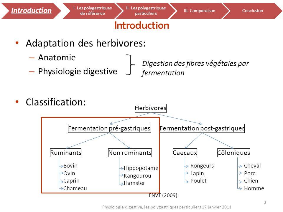 34 Physiologie digestive, les polygastriques particuliers 17 janvier 2011 Introduction I.