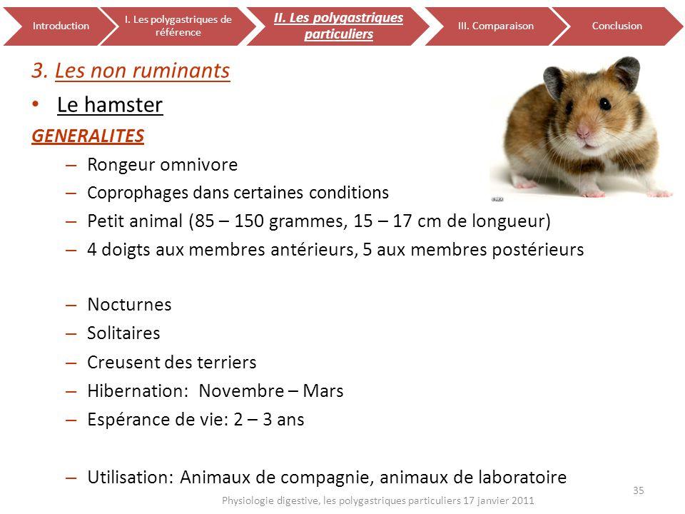 3. Les non ruminants Le hamster GENERALITES – Rongeur omnivore – Coprophages dans certaines conditions – Petit animal (85 – 150 grammes, 15 – 17 cm de