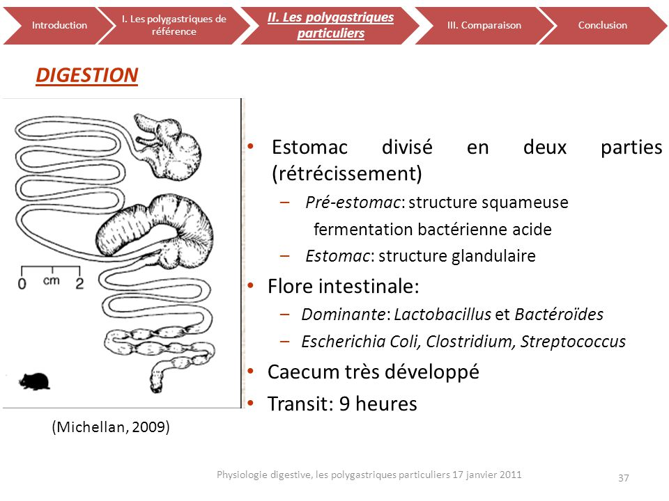 DIGESTION 37 Physiologie digestive, les polygastriques particuliers 17 janvier 2011 Introduction I. Les polygastriques de référence II. Les polygastri