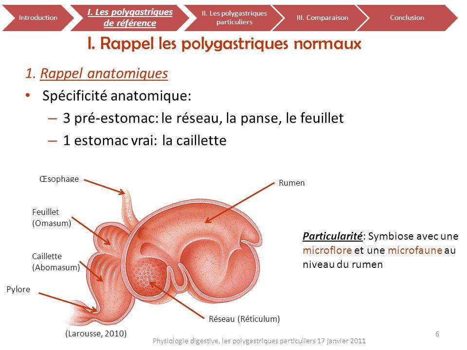 1. Rappel anatomiques Spécificité anatomique: – 3 pré-estomac: le réseau, la panse, le feuillet – 1 estomac vrai: la caillette I. Rappel les polygastr