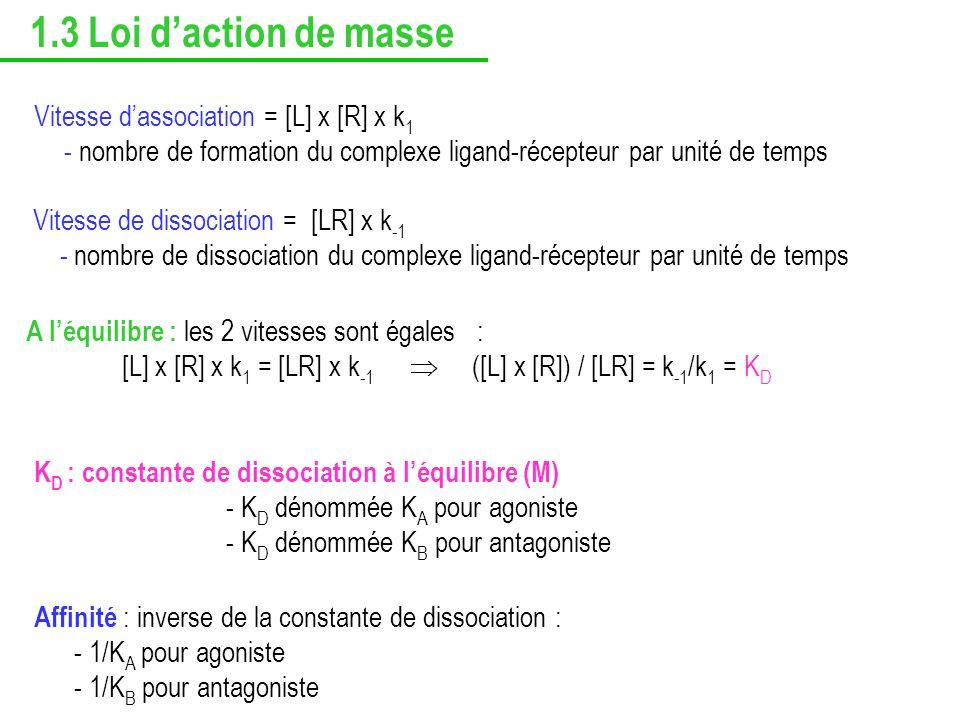 Vitesse dassociation = [L] x [R] x k 1 - nombre de formation du complexe ligand-récepteur par unité de temps A léquilibre : les 2 vitesses sont égales