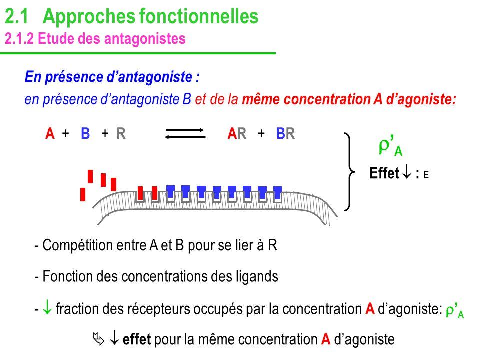 Effet : E A ++ B + + RAR + BR A - fraction des récepteurs occupés par la concentration A dagoniste: A - Compétition entre A et B pour se lier à R effe