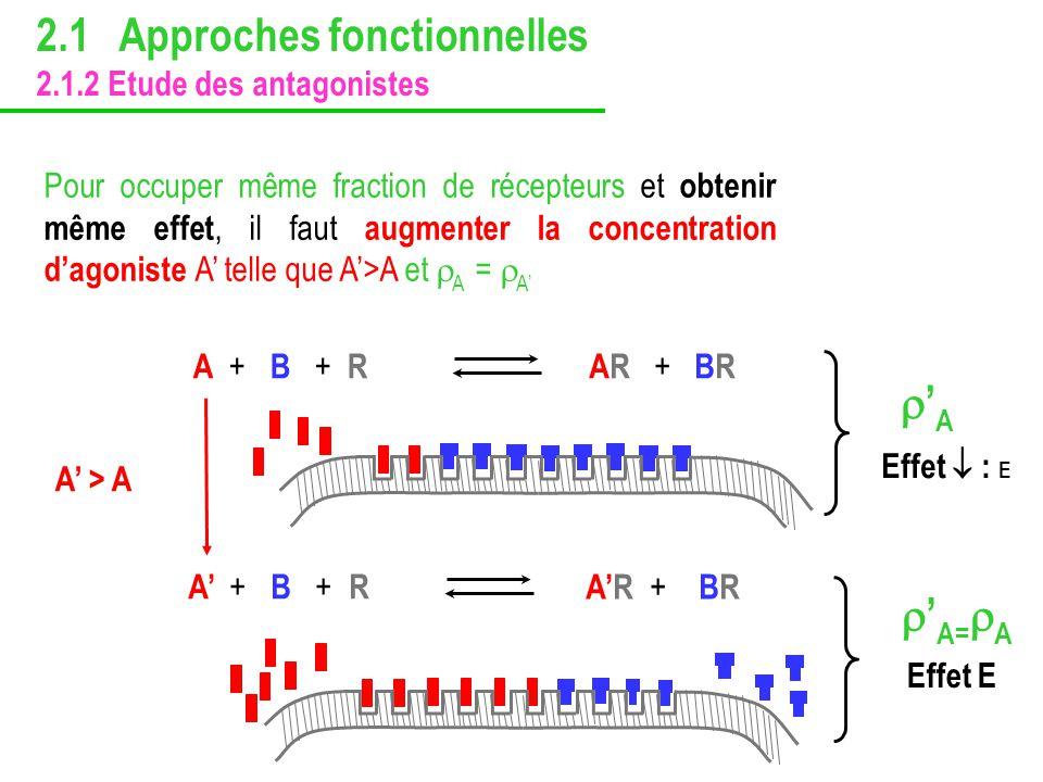 Pour occuper même fraction de récepteurs et obtenir même effet, il faut augmenter la concentration dagoniste A telle que A>A et A = A AR + + BR A ++ B