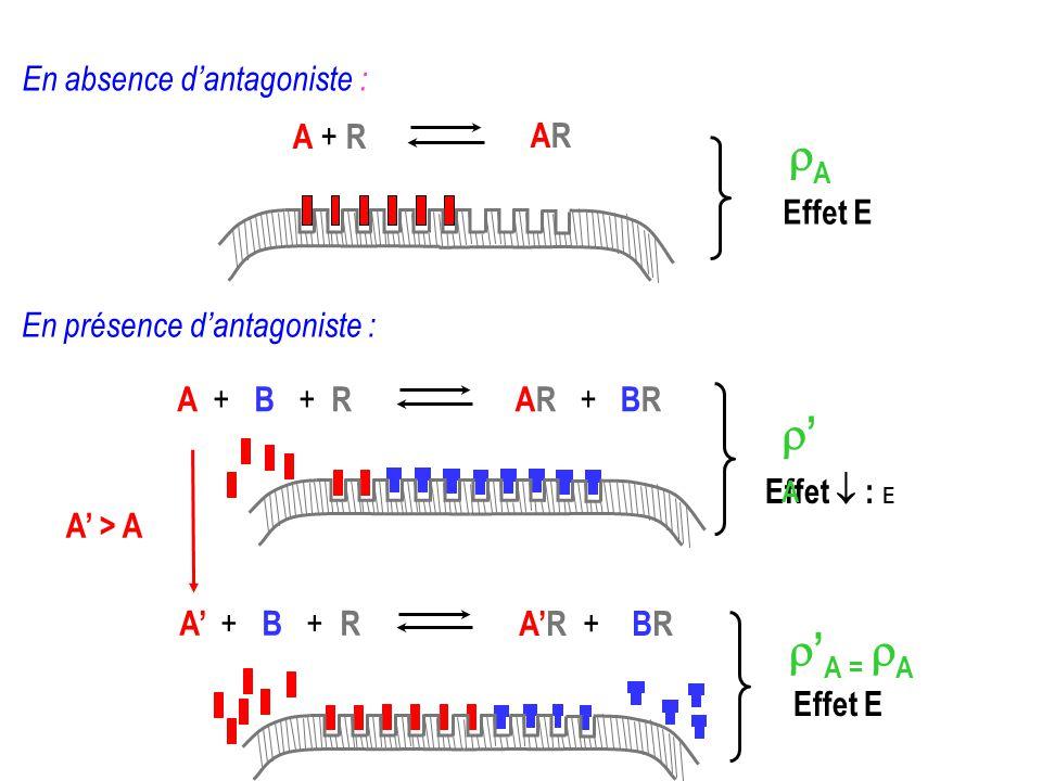 En absence dantagoniste : A + R ARAR Effet E A AR + + BR A ++ B + + R Effet E A = A A > A Effet : E A ++ B + + RAR + BR A En présence dantagoniste :