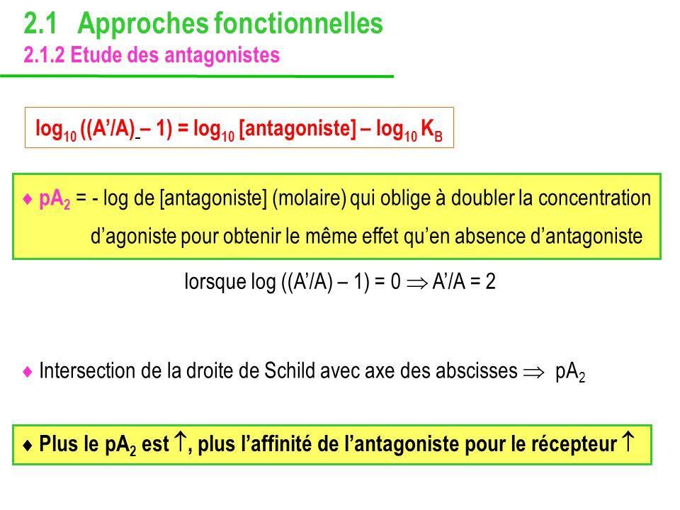 Intersection de la droite de Schild avec axe des abscisses pA 2 pA 2 = - log de [antagoniste] (molaire) qui oblige à doubler la concentration dagonist