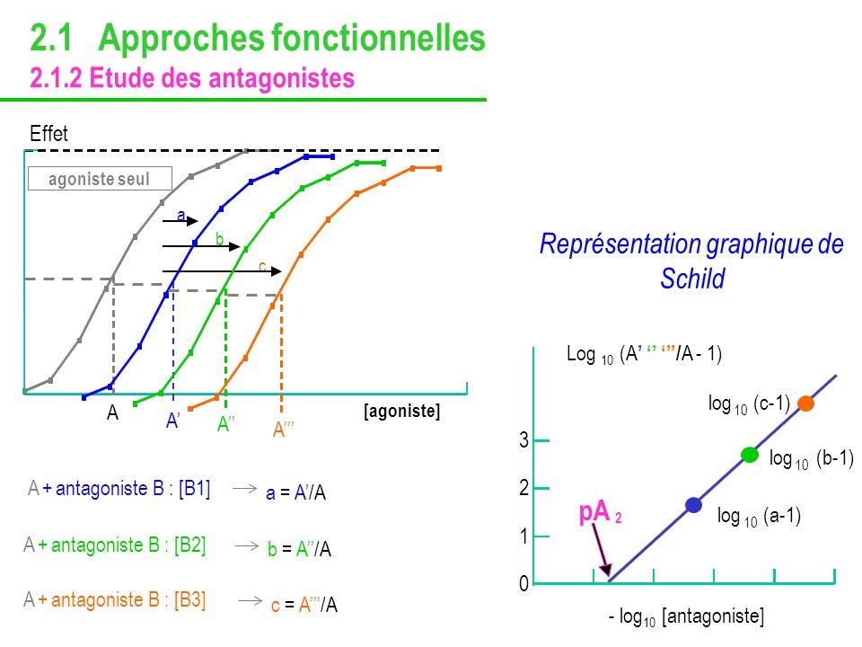 pA 2 Log 10 (A / A - 1) - log 10 [antagoniste] 0 1 2 3 log 10 (a-1) log 10 (b-1) log 10 (c-1) Représentation graphique de Schild a a = A/A b b = A/A c