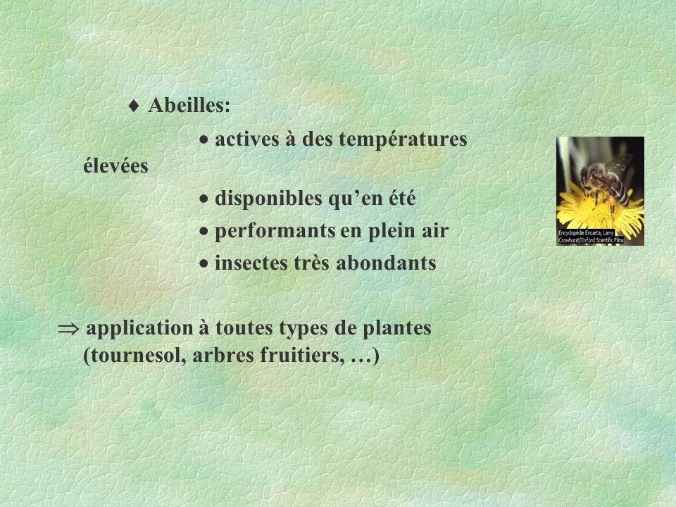 Abeilles: actives à des températures élevées disponibles quen été performants en plein air insectes très abondants application à toutes types de plant