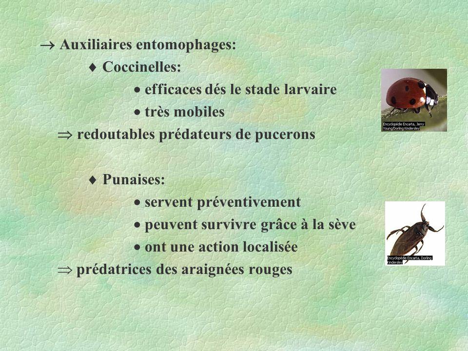 Auxiliaires entomophages: Coccinelles: efficaces dés le stade larvaire très mobiles redoutables prédateurs de pucerons Punaises: servent préventivemen