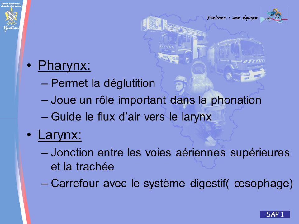 Service départemental d incendie et de secours Yvelines : une équipe SAP 1 Pharynx: –Permet la déglutition –Joue un rôle important dans la phonation –Guide le flux dair vers le larynx Larynx: –Jonction entre les voies aériennes supérieures et la trachée –Carrefour avec le système digestif( œsophage)