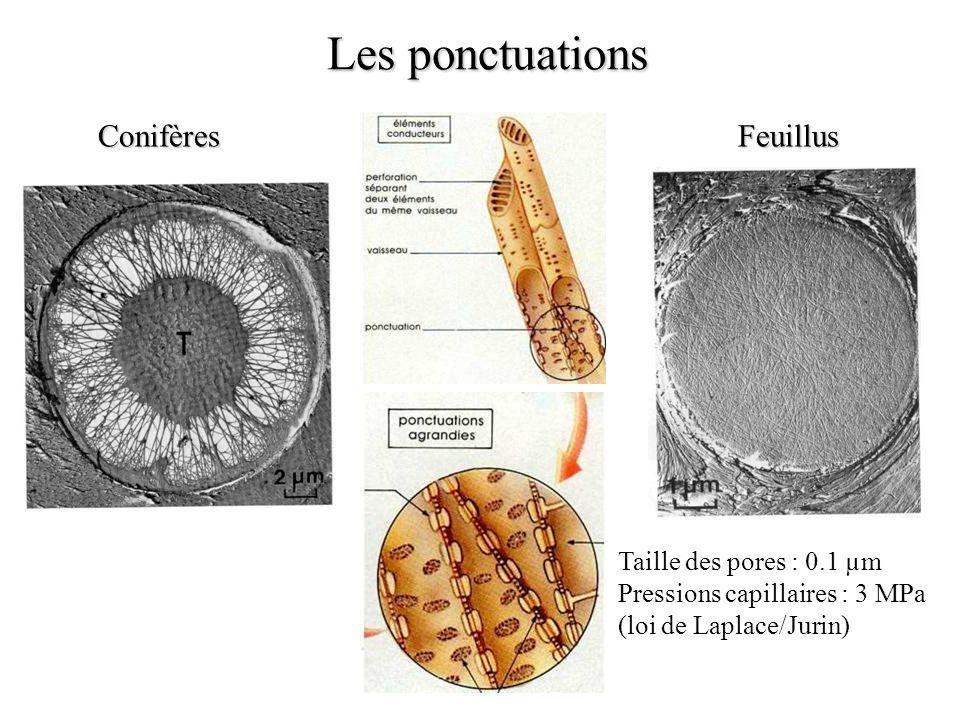 Les ponctuations ConifèresFeuillus Taille des pores : 0.1 µm Pressions capillaires : 3 MPa (loi de Laplace/Jurin)