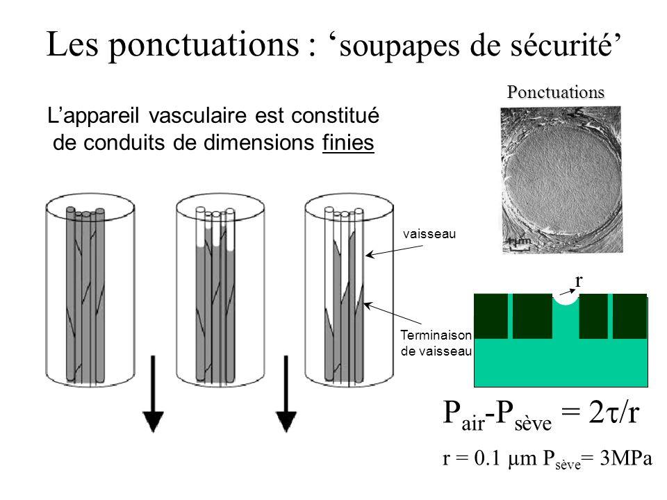 Les ponctuations : soupapes de sécurité Lappareil vasculaire est constitué de conduits de dimensions finies vaisseau Terminaison de vaisseauPonctuations P air -P sève = 2 /r r = 0.1 µm P sève = 3MPa r