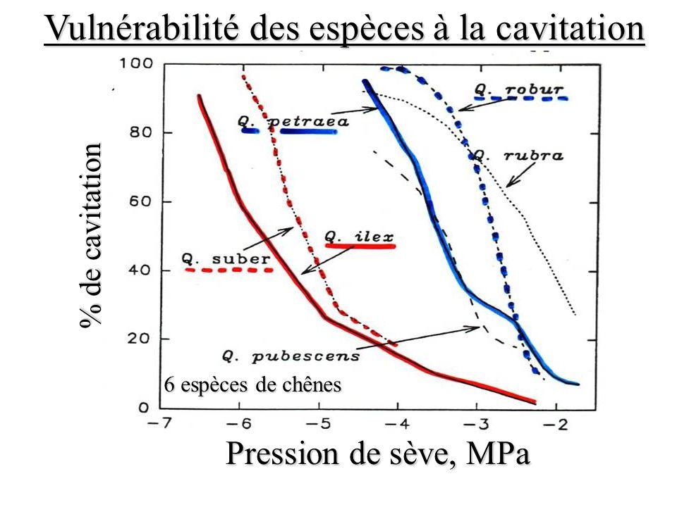 Vulnérabilité des espèces à la cavitation % de cavitation Pression de sève, MPa 6 espèces de chênes