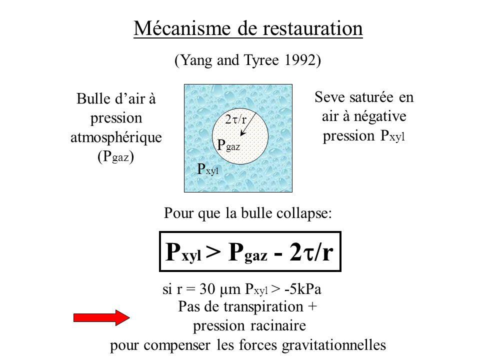 Bulle dair à pression atmosphérique (P gaz ) 2 /r P xyl P gaz Mécanisme de restauration (Yang and Tyree 1992) Seve saturée en air à négative pression P xyl Pour que la bulle collapse: P xyl > P gaz - 2 /r si r = 30 µm P xyl > -5kPa Pas de transpiration + pression racinaire pour compenser les forces gravitationnelles