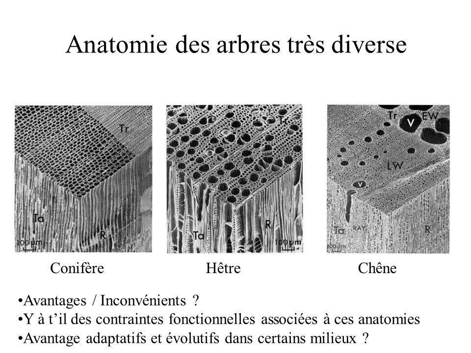 ConifèreHêtreChêne Anatomie des arbres très diverse Avantages / Inconvénients .