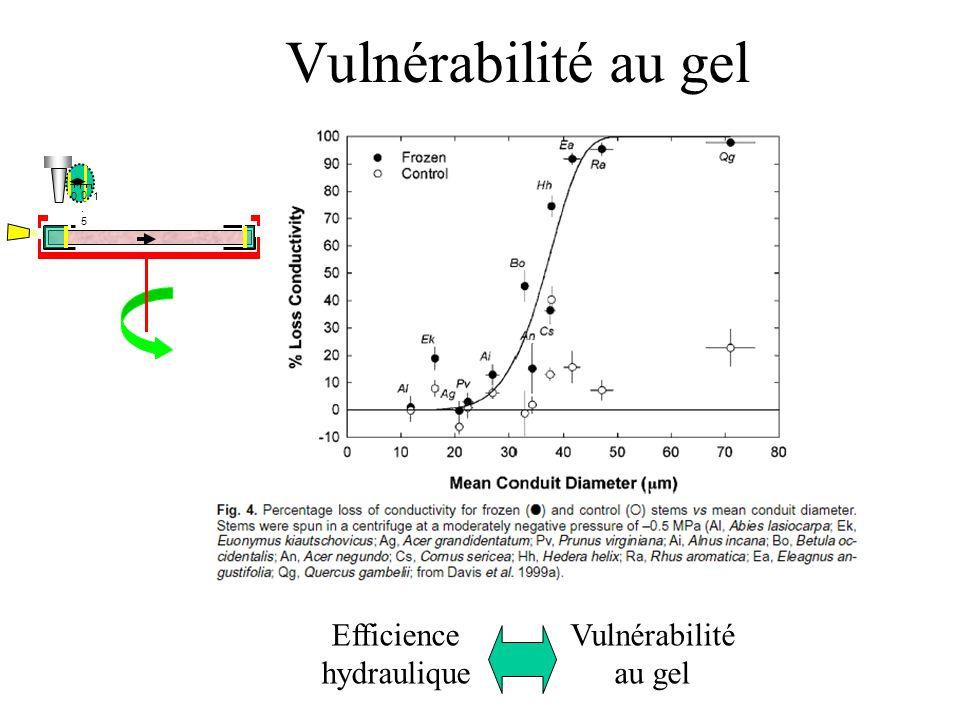 Vulnérabilité au gel 0 0.50.5 1 Efficience hydraulique Vulnérabilité au gel