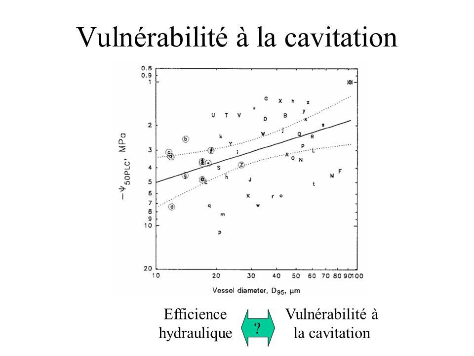 Vulnérabilité à la cavitation Efficience hydraulique Vulnérabilité à la cavitation ?