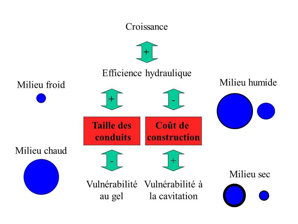 Efficience hydraulique Vulnérabilité au gel - Taille des conduits + Milieu froid Milieu chaud Coût de construction Milieu sec Milieu humide - Vulnérabilité à la cavitation + + Croissance
