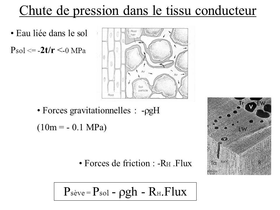 Eau liée dans le sol P sol <= - 2t/r < -0 MPa Chute de pression dans le tissu conducteur Forces gravitationnelles : - gH (10m = - 0.1 MPa) Forces de friction : -R H.Flux P sève = P sol - gh - R H.Flux