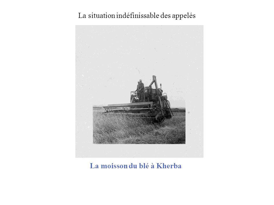La moisson du blé à Kherba La situation indéfinissable des appelés