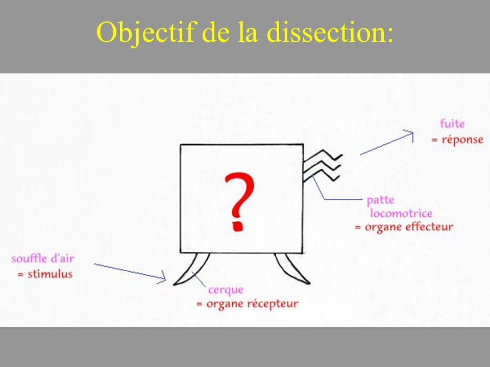 Objectif de la dissection:
