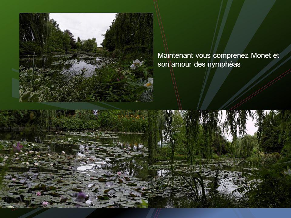 À la découverte du bassin des fleurs de lotus et des nénuphars
