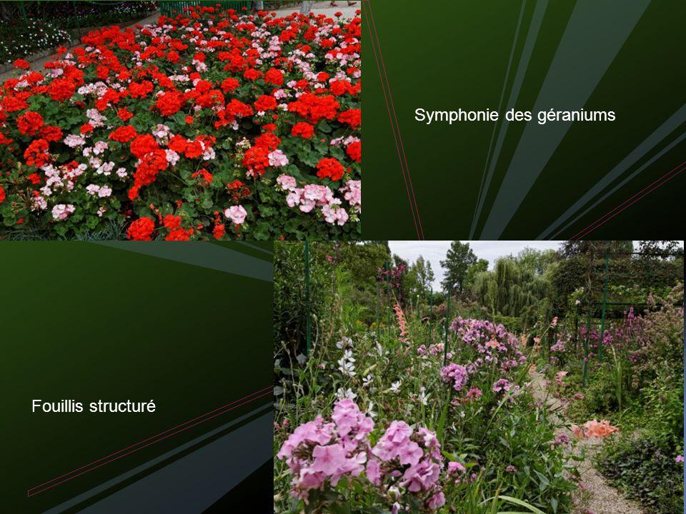 Fouillis structuré Symphonie des géraniums
