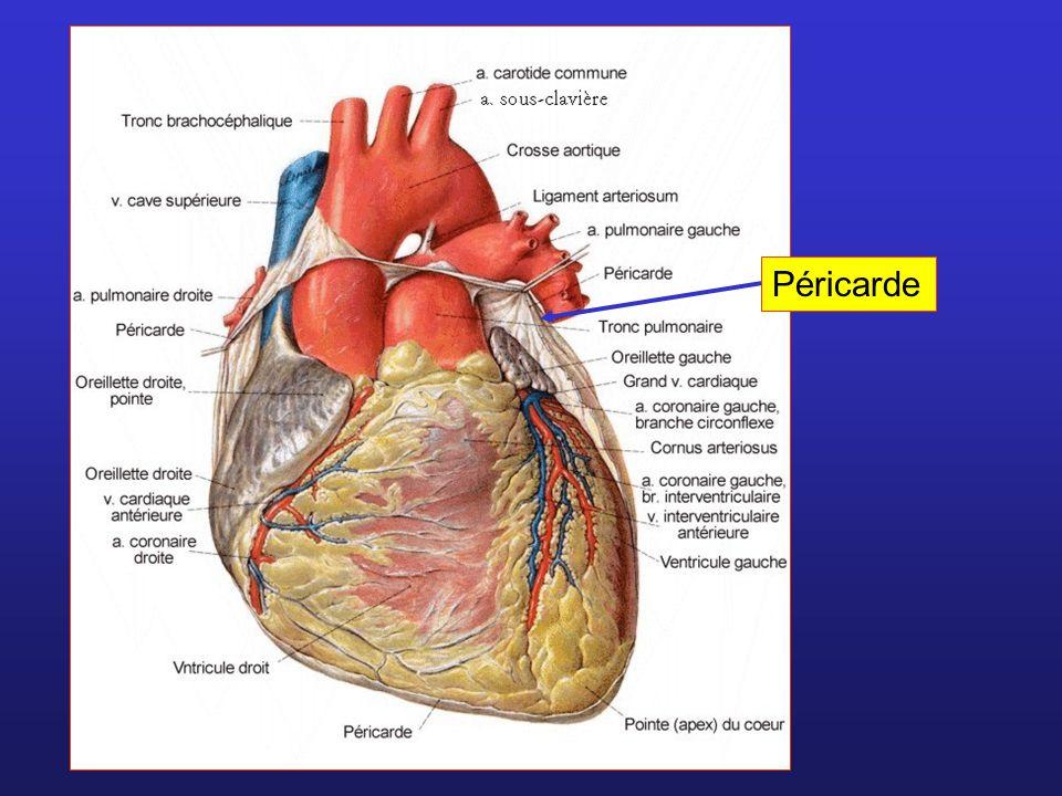 Valvules cardiaques Valvules auriculo- ventriculaires Valvules sigmoïdes (aortique et pulmonaire) Sang passe des oreillettes aux ventricules, mais pas linverse OreillettesVentricules Artères Sang passe des ventricules aux artères, mais pas linverse