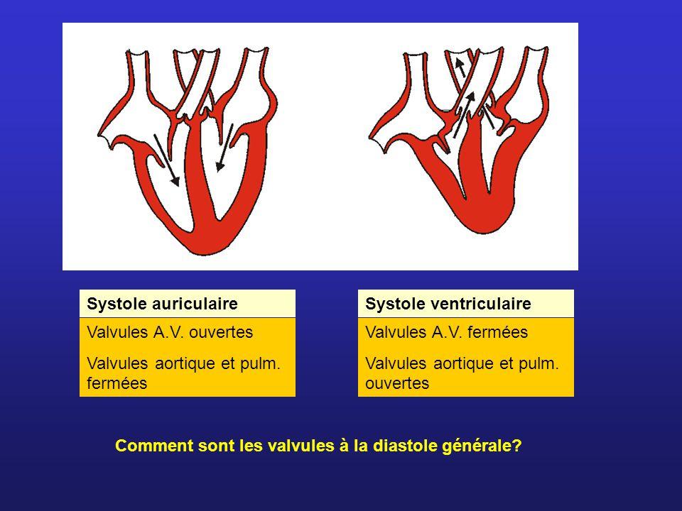 Systole auriculaire Valvules A.V. ouvertes Valvules aortique et pulm. fermées Comment sont les valvules à la diastole générale? Systole ventriculaire