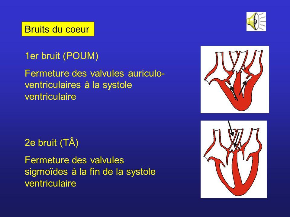 Bruits du coeur 1er bruit (POUM) Fermeture des valvules auriculo- ventriculaires à la systole ventriculaire 2e bruit (TÂ) Fermeture des valvules sigmo