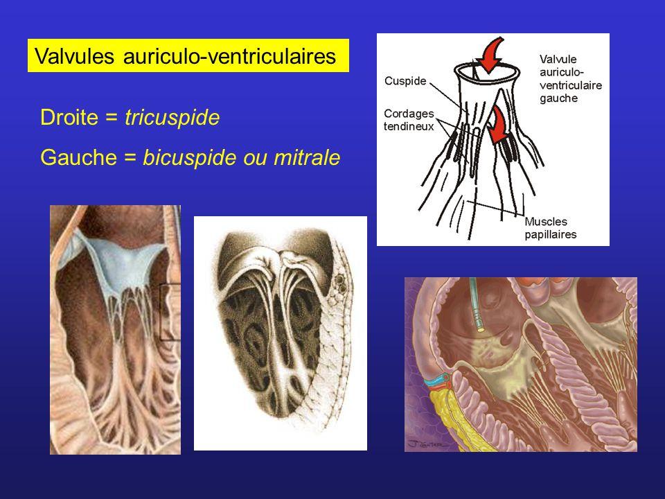 Valvules sigmoïdes Valvule aortique Valvule pulmonaire