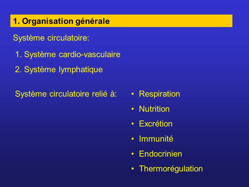 1. Organisation générale Système circulatoire: 1. Système cardio-vasculaire 2. Système lymphatique Système circulatoire relié à:Respiration Nutrition