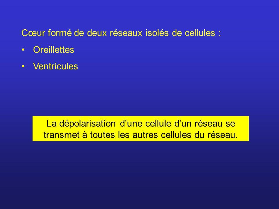 Cœur formé de deux réseaux isolés de cellules : Oreillettes Ventricules La dépolarisation dune cellule dun réseau se transmet à toutes les autres cell