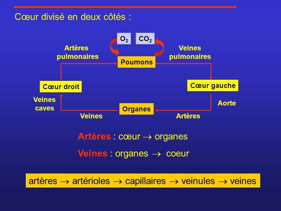 Cœur divisé en deux côtés : Cœur gauche Cœur droit Organes CO 2 Poumons O2O2 Artères : cœur organes Veines : organes coeur Artères pulmonaires Veines