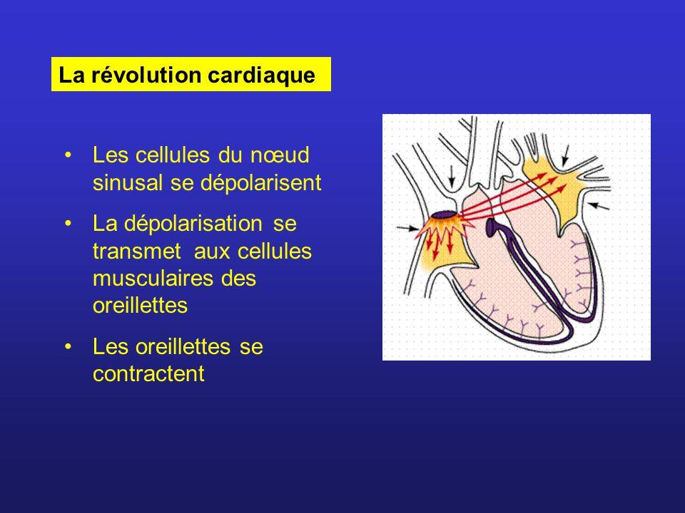 La dépolarisation atteint le nœud auriculo- ventriculaire La dépolarisation se transmet au faisceau de His et aux fibres de Purkinje La dépolarisation se transmet à l ensemble des cellules musculaires des ventricules Les ventricules se contractent