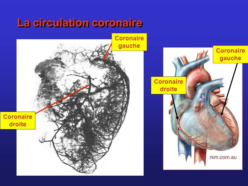 La circulation coronaire Coronaire droite Coronaire gauche Coronaire droite Coronaire gauche