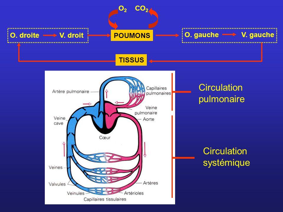Circulation pulmonaire Circulation systémique O. gauche V. gauche POUMONS O2O2 CO 2 O. droiteV. droit TISSUS