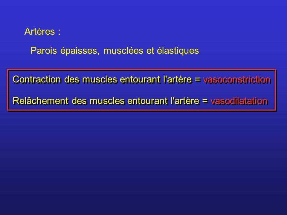 Artères : Parois épaisses, musclées et élastiques Contraction des muscles entourant l'artère = vasoconstriction Relâchement des muscles entourant l'ar