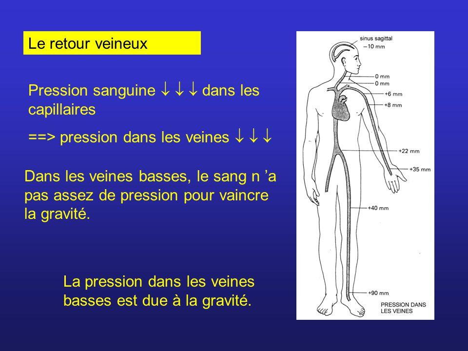 Le retour veineux Pression sanguine dans les capillaires ==> pression dans les veines Dans les veines basses, le sang n a pas assez de pression pour v
