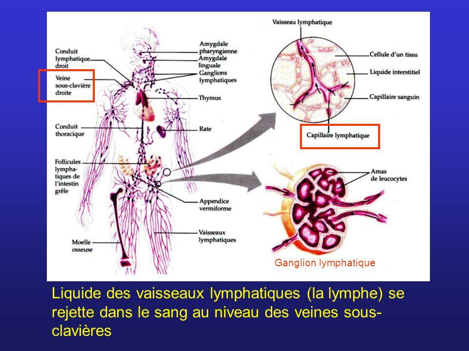 Ganglion lymphatique Liquide des vaisseaux lymphatiques (la lymphe) se rejette dans le sang au niveau des veines sous- clavières