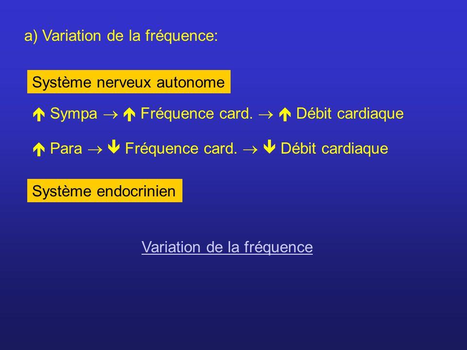 a) Variation de la fréquence: Sympa Fréquence card. Débit cardiaque Para Fréquence card. Débit cardiaque Système nerveux autonome Système endocrinien
