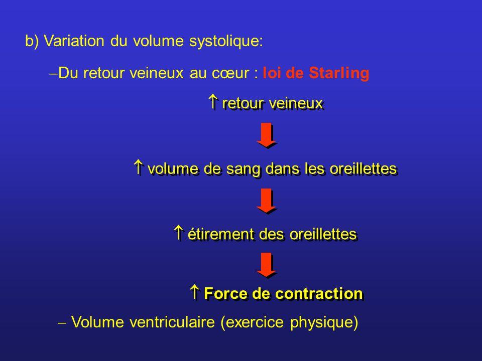 b) Variation du volume systolique: Du retour veineux au cœur : loi de Starling retour veineux volume de sang dans les oreillettes étirement des oreill