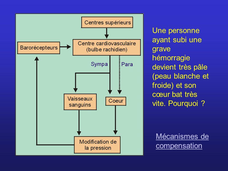 Lorsque la pression augmente, les barorécepteurs sont stimulés et envoient des influx au centre cardio- vasculaire.
