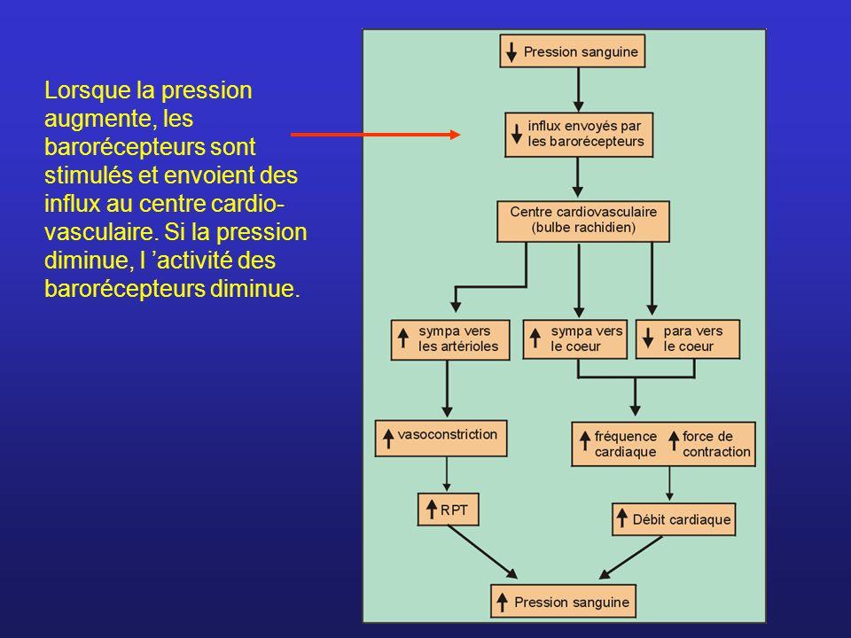 Lorsque la pression augmente, les barorécepteurs sont stimulés et envoient des influx au centre cardio- vasculaire. Si la pression diminue, l activité